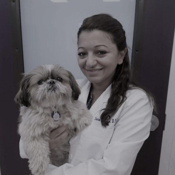 Dr. Sara Ibrahim
