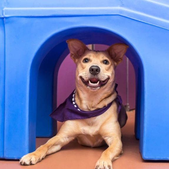 Wagly has all of the summer travel options you need for pet care.