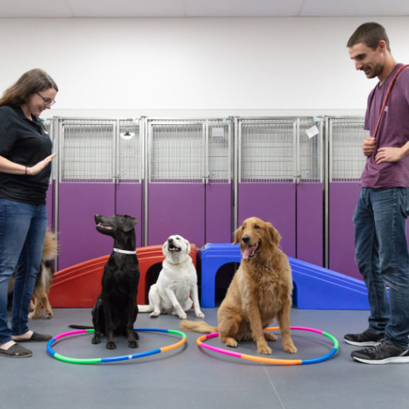 Dog Daycare at Wagly Pet Hospital