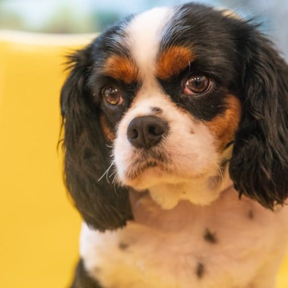 Pet training services at wagly pet campus